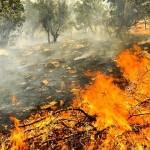 مهار آتش سوزی منطقه حفاظت شده قلاجه گیلانغرب/۲۰ هکتار جنگل ومرتع سوخت