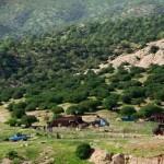 تصاویر:سیاه چادرهای ایل کلهر در دامنه کوه سریوان