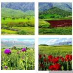 طبیعت بکر بهاری شهرستان گیلانغرب از نگاه لنز دوربین
