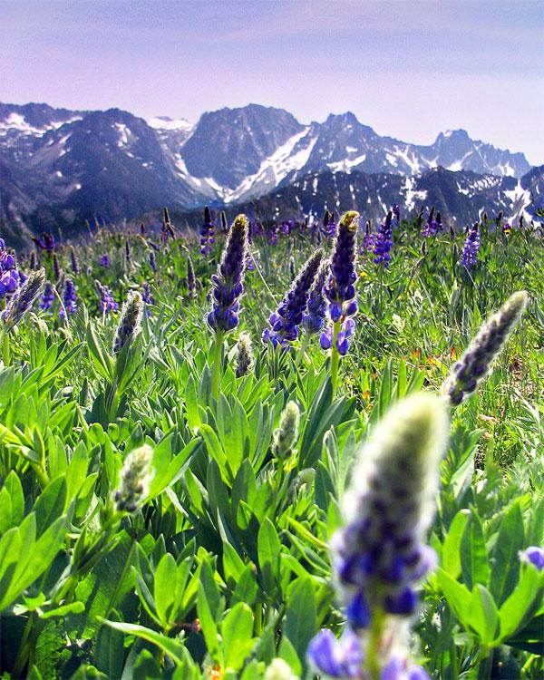 تصاویری زیبا از گل های بهاری