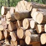 کشف ۲ محموله چوب قاچاق در گیلانغرب