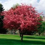 تصویری از یک درخت زیبا