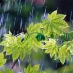 بارش اولین باران پاییزی در شهرستان گیلانغرب وخوشحالی مردم وکشاورزان