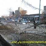 هرس غیر اصولی وبی رویه درختان شهر گیلانغرب + تصاویر