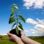 بی توجهی به کاشت درختان بعداز هفته درختکاری درگیلانغرب