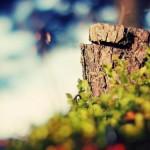 قطع درختان پارک شاهد وقلع وقع درختان سطح شهرگیلانغرب به بهانه هرس + تصویر